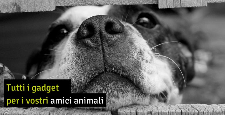 articoli-animali